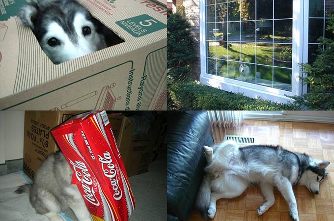 猫と一緒に育ったらネコっぽくなってしまった犬のタリーちゃんが可愛い