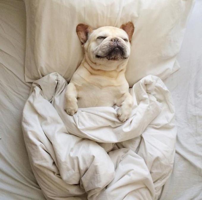 ベッド寝る犬たち4