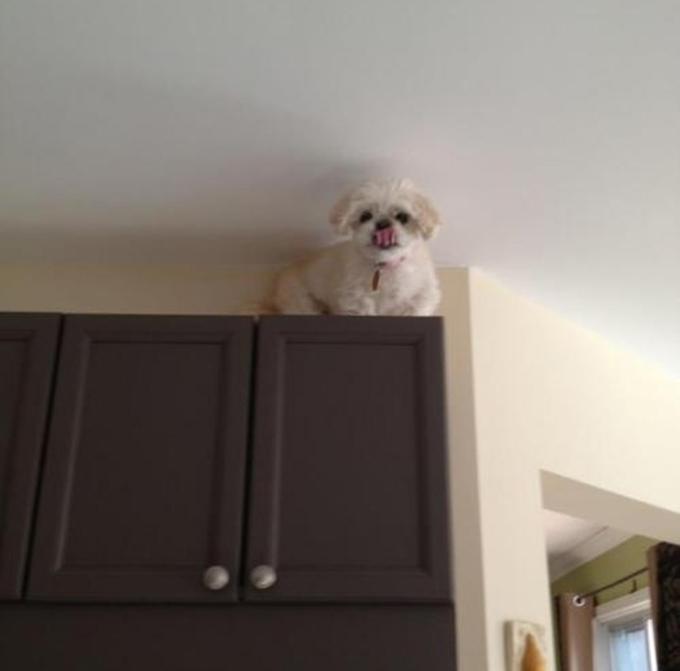 いたずら犬、猫12