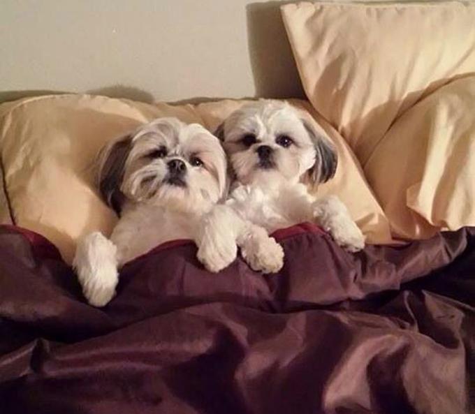 ベッド寝る犬たち19