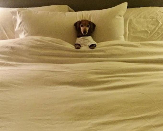 ベッド寝る犬たち16
