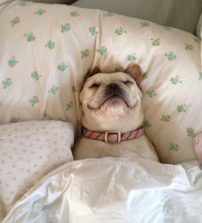 ベッド寝る犬たち2