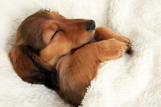 ベッド寝る犬たち3