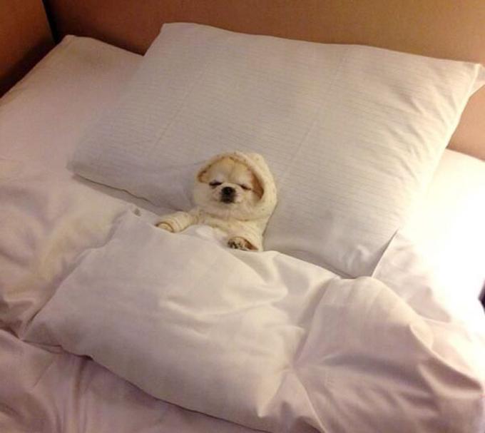 ベッド寝る犬たち10