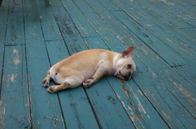 やる気がないにもほどがある!脱力状態の犬のおもしろ画像19選