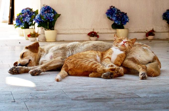 枕のように犬を使って天使のような寝顔を見せる可愛い猫たち