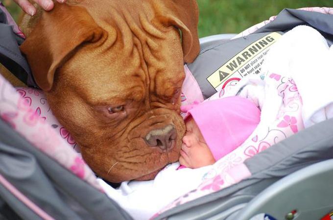 ようこそ我が家へ!新しい兄弟の誕生を優しい眼差しで見つめる犬たち
