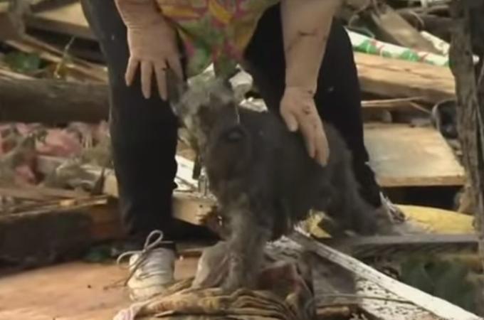 テレビの取材中に起きた奇跡!竜巻により行方不明となった犬を救出