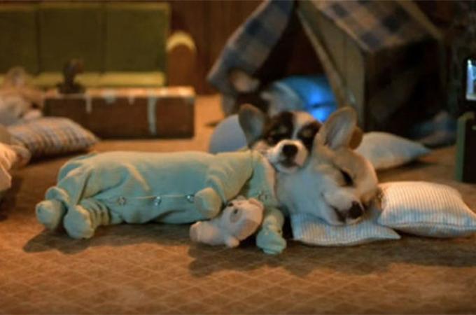 ファッションモデルもお手上げ!見事にパジャマを着こなす犬たち