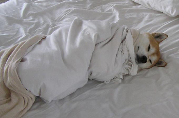 あと5分寝かせて…ベッドを完全に占領して眠る犬たちの可愛い寝顔