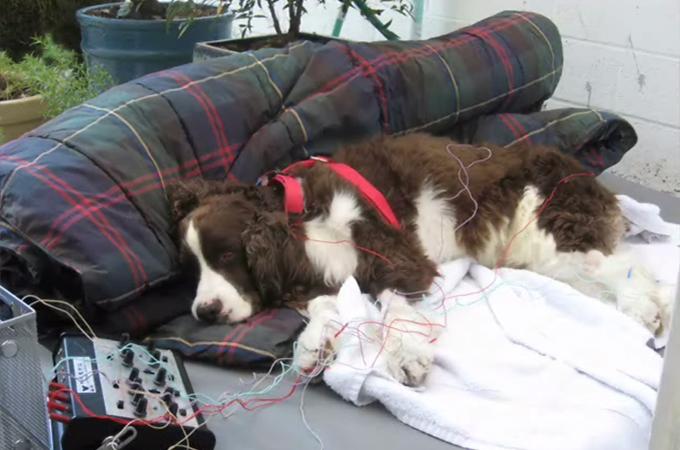 二度と歩けないと言われた愛犬が飼い主さんの希望を胸に奇跡を起こす