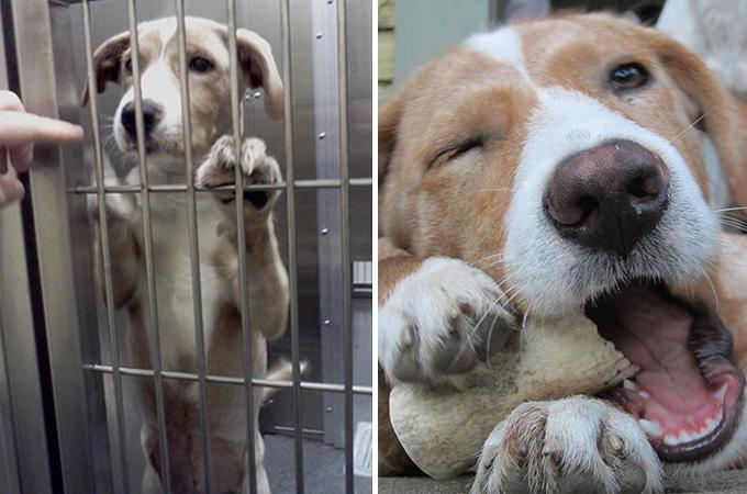 保護施設から引き取られた犬や猫の表情ビフォー・アフター15選