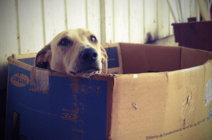 ボクは生きていたかった。捨て犬たちの心の声を綴った悲しいお話