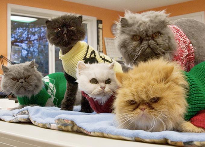 シニア猫の画像10