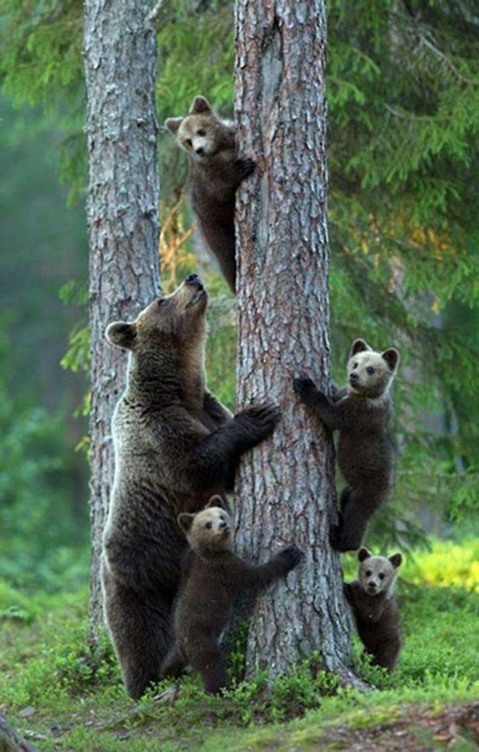 動物たちの家族愛10