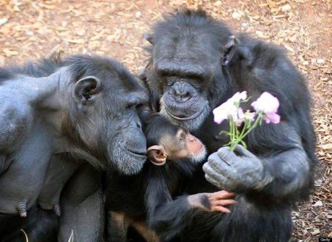 動物たちの家族愛1