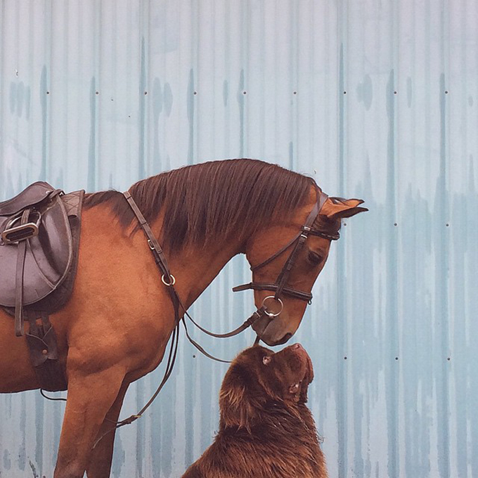 少年と犬の画像11