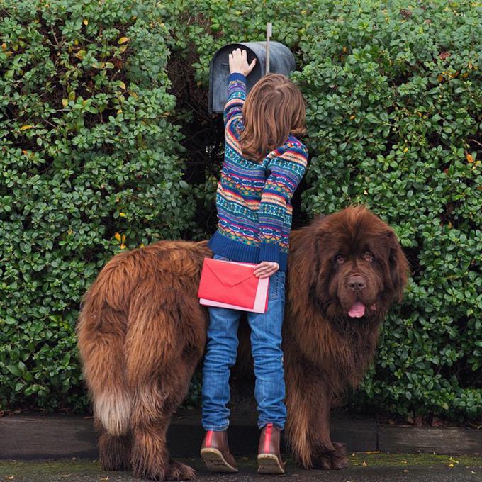 少年と犬の画像13