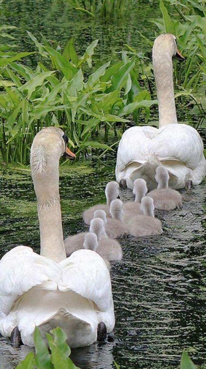 動物たちの家族愛13