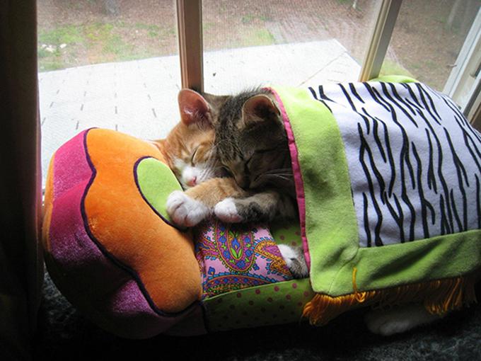 子猫の寝顔画像14