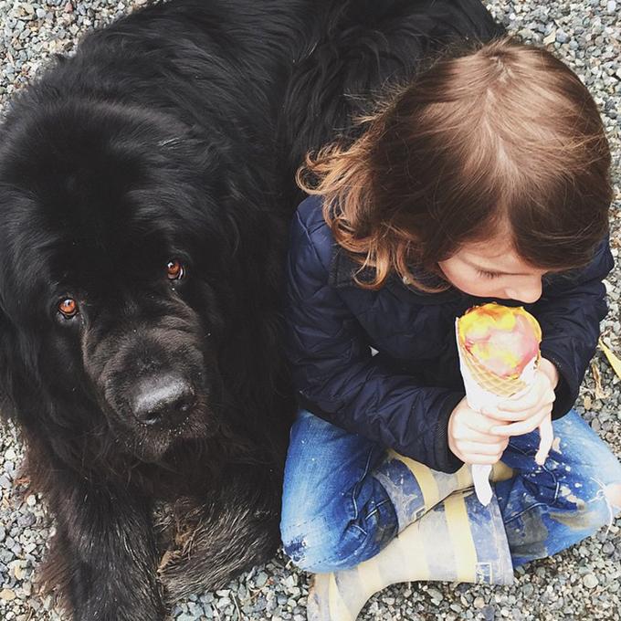 少年と犬の画像15
