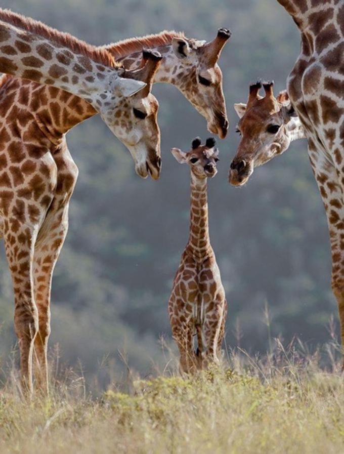 動物たちの家族愛15