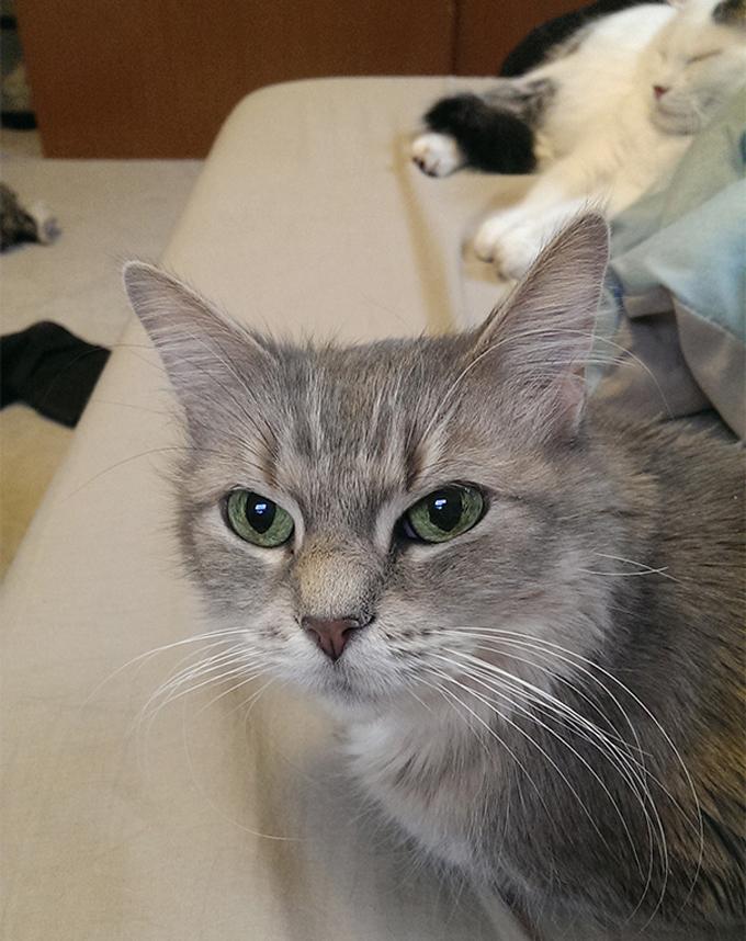 シニア猫の画像15