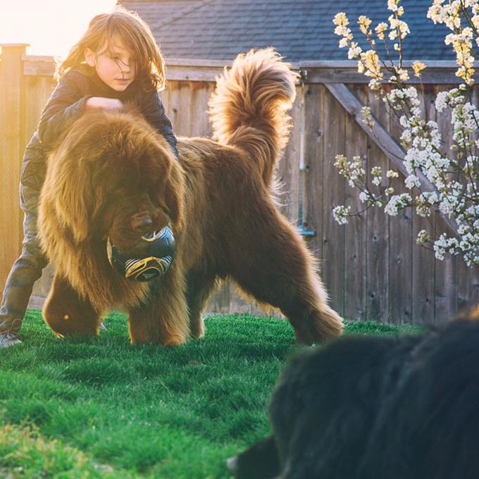 少年と犬の画像16