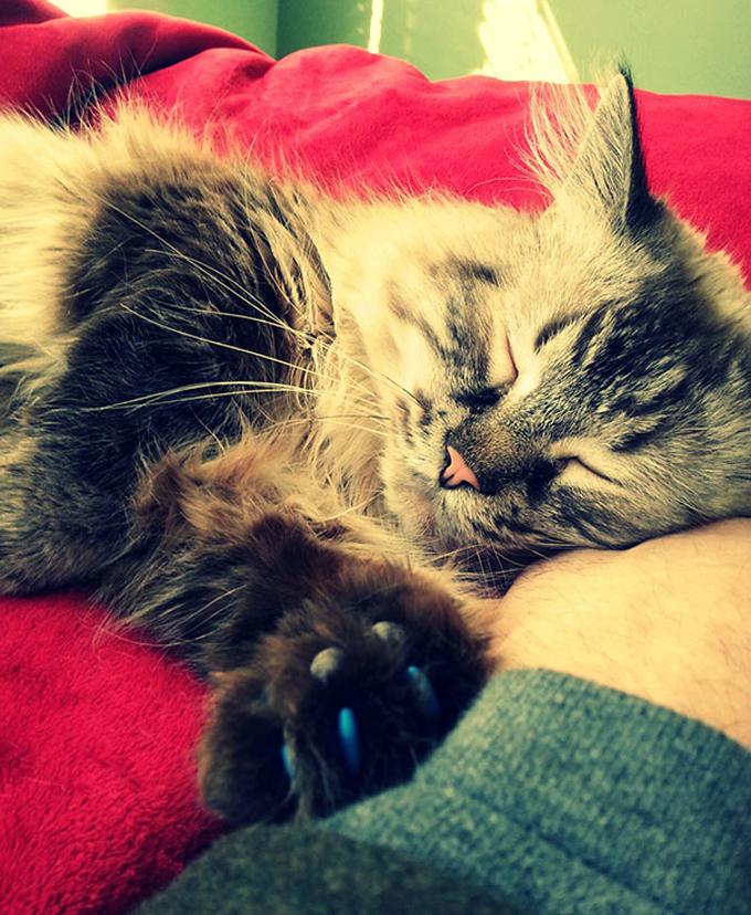 シニア猫の画像16