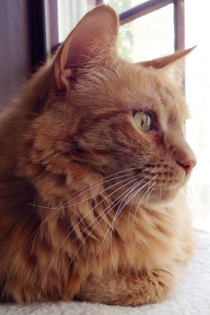 シニア猫の画像18