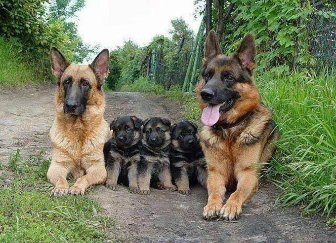 動物たちの家族愛19