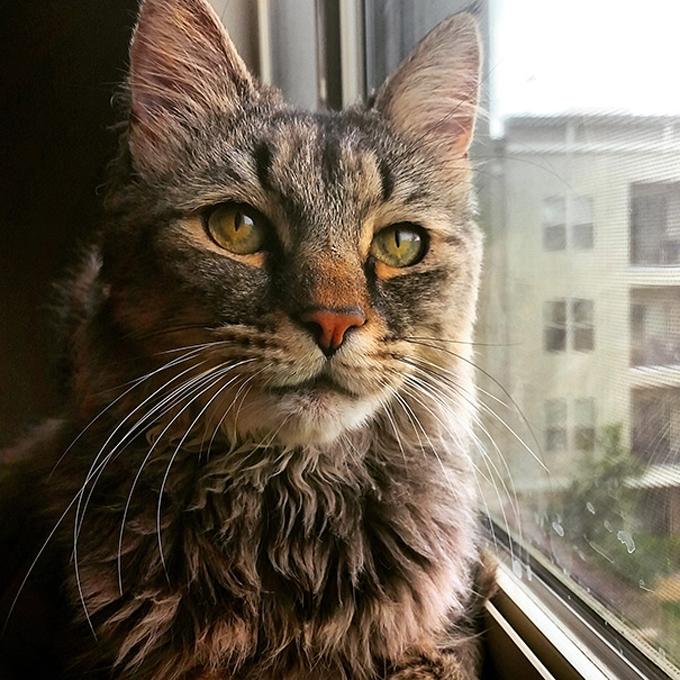 シニア猫の画像2