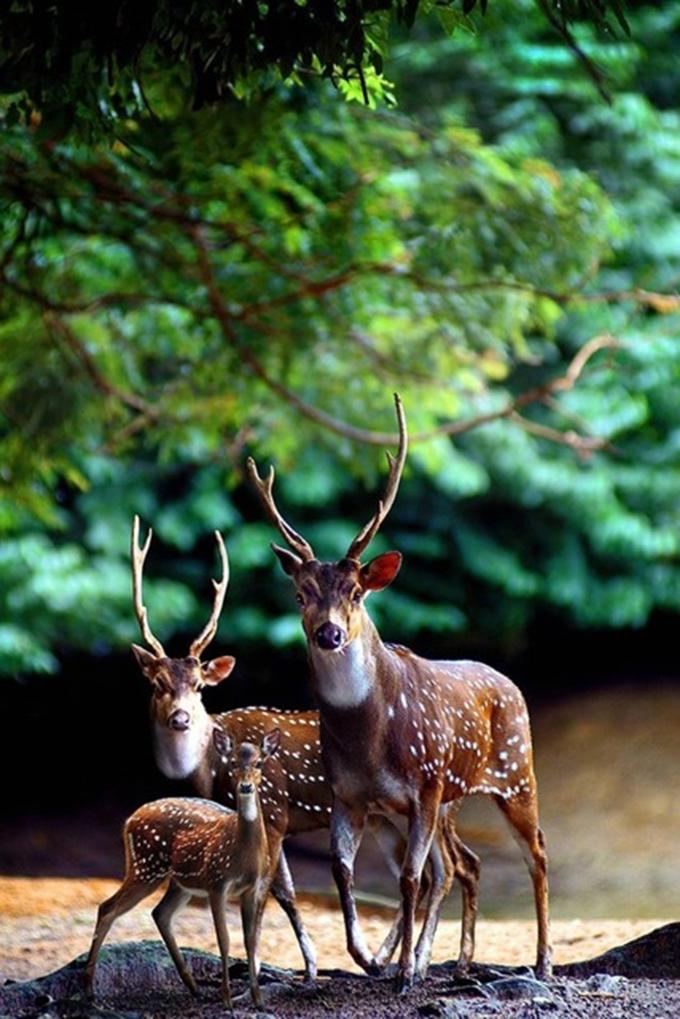 動物たちの家族愛22
