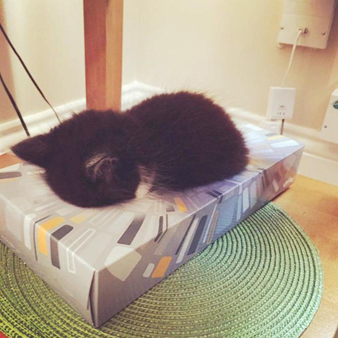 子猫の寝顔画像2