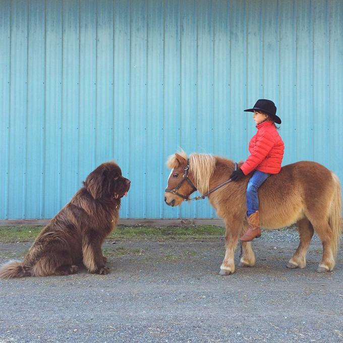 少年と犬の画像2