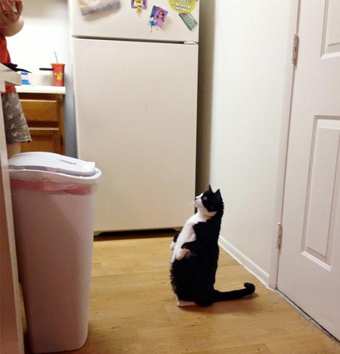 シニア猫の画像3