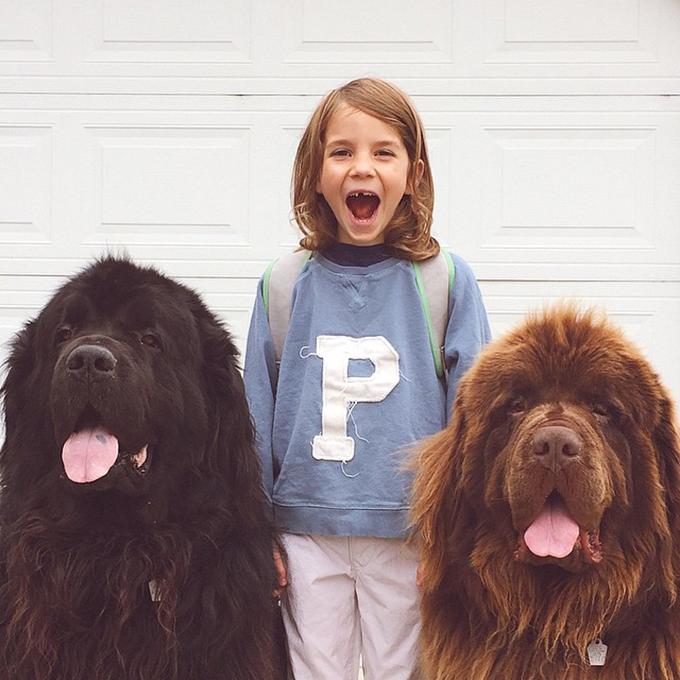少年と犬の画像3