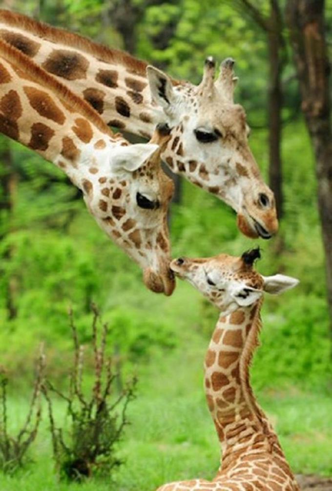 動物たちの家族愛3