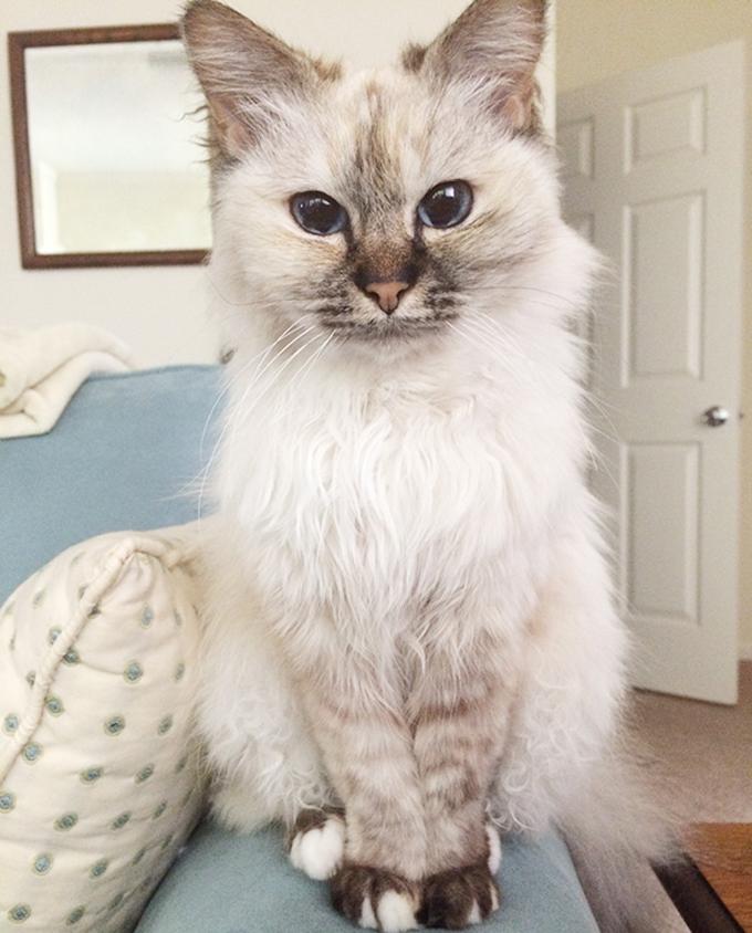 シニア猫の画像4