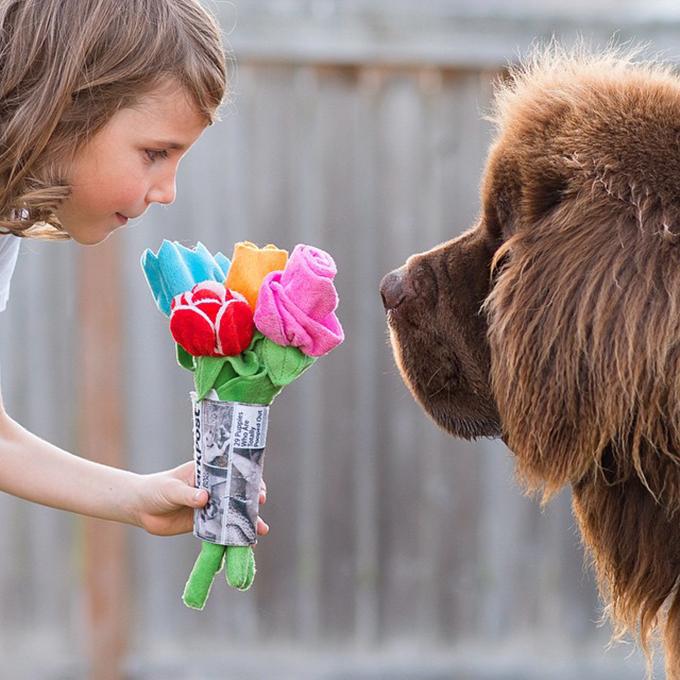 少年と犬の画像5