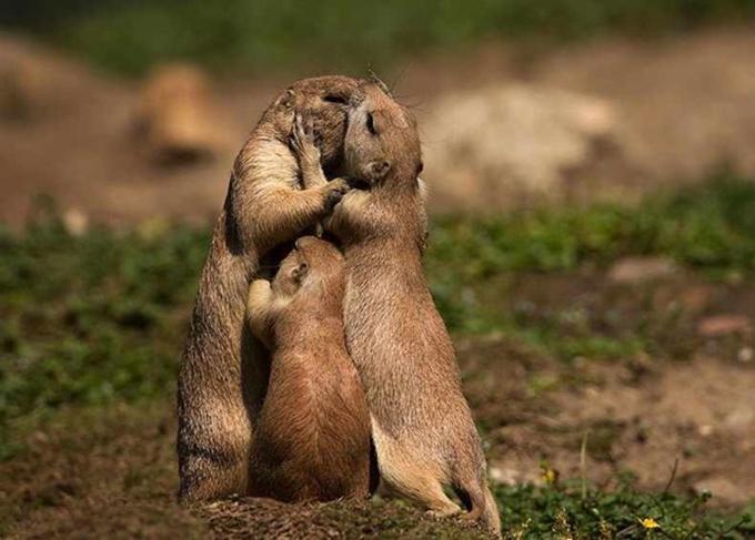 動物たちの家族愛5
