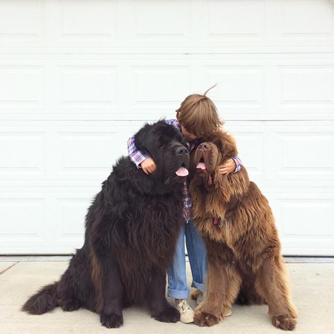 少年と犬の画像6