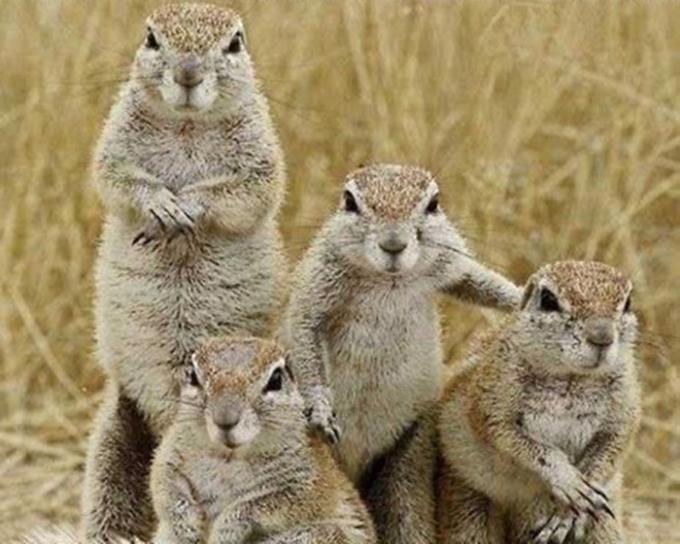 動物たちの家族愛6