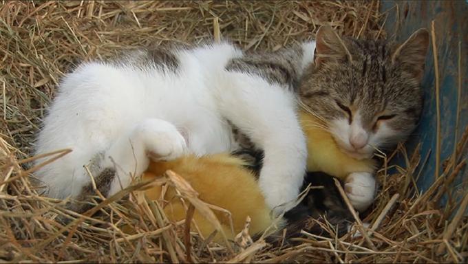 猫とアヒルの画像7