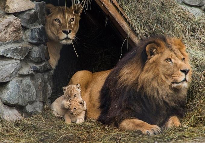 動物たちの家族愛7