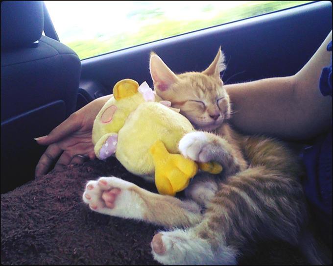 猫の画像8