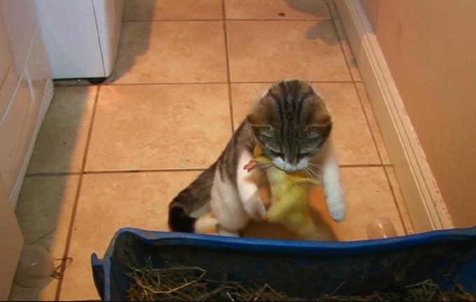 猫とアヒルの画像8
