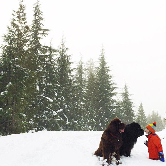 少年と犬の画像8