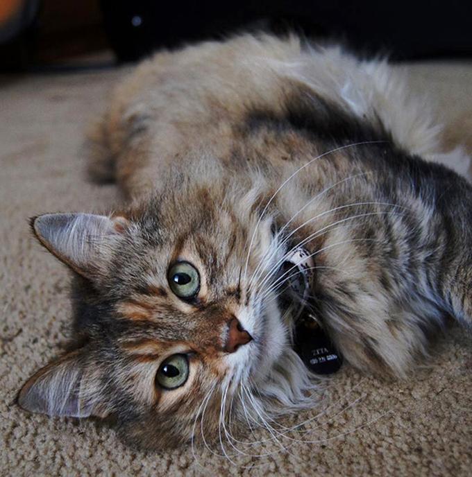 シニア猫の画像9