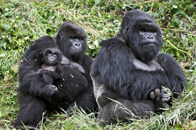 動物たちの家族愛9